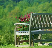 The bench  by jeanlphotos