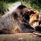 Grizzly by AngieBanta