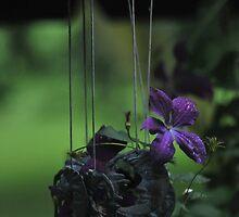 Purple Predator by LavenderMoon