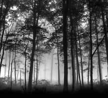 Forest Layers by Lori Deiter