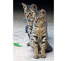 Kitten duo Photographic Print