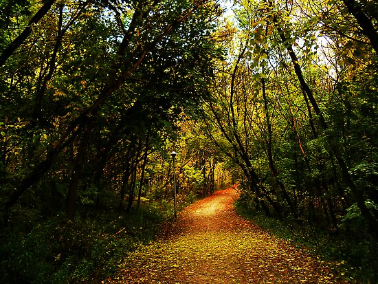 Leaves Along The Path by Marie Van Schie