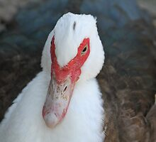 Fowl Duck  by Nobleone
