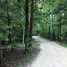 Thru the Florida Woods by Laurie Perry