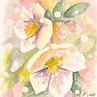 Christmas Rose by Patsy Smiles