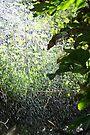 Downpour - PostCardArt by owlspook