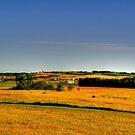 Golden Fields by Larry Trupp