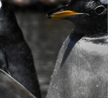 Penguin, Edinburgh Zoo by Den McKervey
