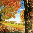 Autumn in Connecticut by Alberto  DeJesus