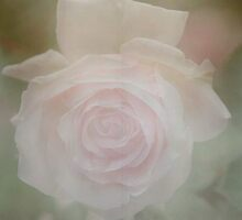 softening a rose and hoping my seams are straight……………… by Barbara  Nosker