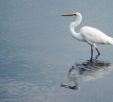 Egret reflections by Jenny Dean