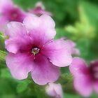 Untitled Flora 2 by Scott Mitchell