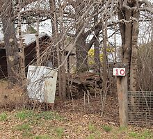 Overgrown #10 mail box by Tom McDonnell