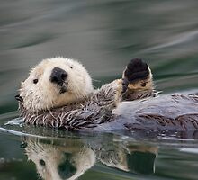 The Waving Sea Otter by Tim Grams