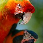 Colourful Parrots by raceman