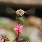 Bee fly by onlyricky