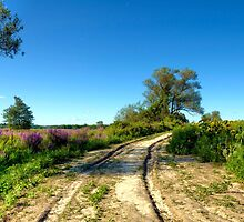 Road to the Field of Dreams by Monica M. Scanlan