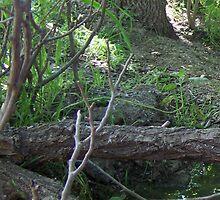 Little Creek - PostCardArt by owlspook