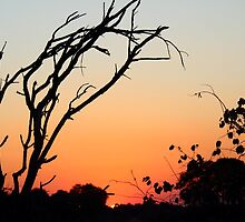 Sunset in Zambia. by Mel1973