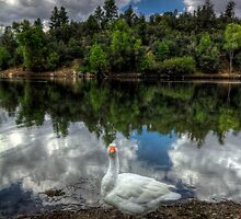 F11 Quack by Bob Larson