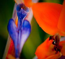 Spanish flower by davidautef
