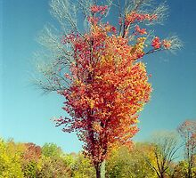 Autumn Tree by Alberto  DeJesus
