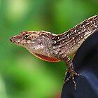 Lizard by Irina777