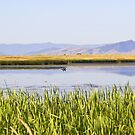 Ninepipe Wildlife Refuge in the early morning (1 of 3) by amontanaview