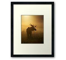 Bull Moose in Fog Framed Print
