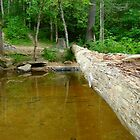 The Log~ by Virginian Photography (Judy)