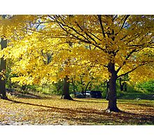 Central Park, New York City  Photographic Print