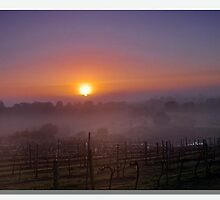 Mornings Mist by Jacs14