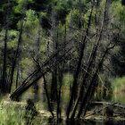 Deadwood Swamp by sundawg7