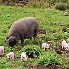 The Piglets of Wild Slack Farm by James  Key