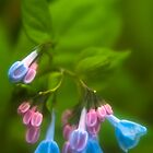 Virginia Bluebells by JHRphotoART