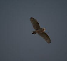 my first owl by waynepearce