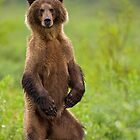 The Dancing Bear by Tim Grams