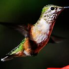 Hummingbird by George I. Davidson