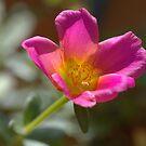 Small Flower  by Glenn Cecero