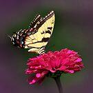 Butterfly #3 by Eileen McVey