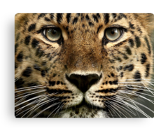 Beauty Up Close! Canvas Print