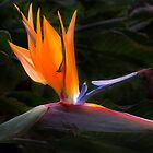 Bird Of Paradise Flower by Brian Harig
