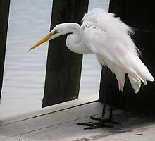 Great White Egret on the Block by Paulette1021