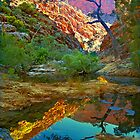 Rockpool relections, Central Australia. by Kevin McGennan