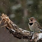 Flicker in the Snow by Tim Grams