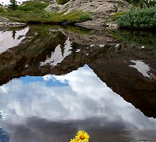 Flower Power at Timberline  by Ken Fleming