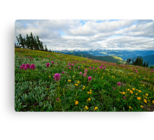 Olympic Mountains Wildflowers Canvas Print