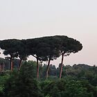 Umbrella Pines at dawn - Rome, Italy by tracyannjones