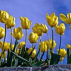 Botanical Gardens Spring—Tasmania by Brett Rogers