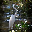 Great Egret, Ardea alba #2 by Odille Esmonde-Morgan